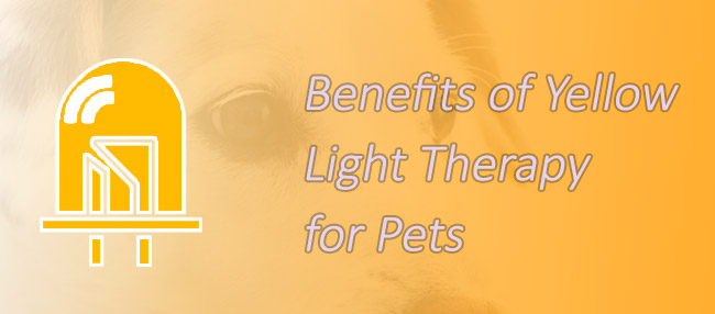 the helpful benefits of pet therapy Here are some tips that can help you and your pets stay healthy: take your pet to its veterinarian regularly so it stays in good health practice good hygiene around your pets so they don't pass germs to you.